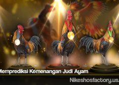 Tips Memprediksi Kemenangan Judi Ayam