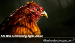 Arti Dari Judi Sabung Ayam Aduan
